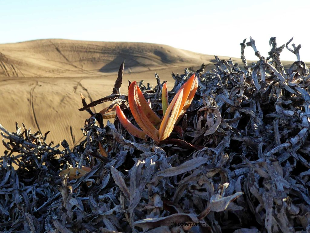 bed and breakfast - concon - dune et plante seche